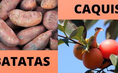 En el Valle del Guadalhorce es temporada de batata y caqui