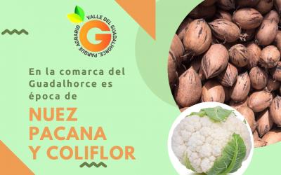 Explosión de colores y aromas en el Guadalhorce, es época de nueces pacanas y coliflores